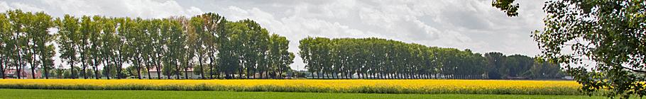 pappel-allee-fasanerie-2.jpg