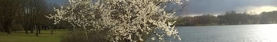 spring-2016.jpg