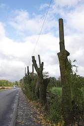 art-Bäume2