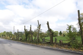 Fasanerie: Nun sind alle Bäume gefällt worden!