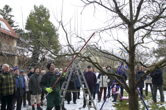 Obstbaumschnittkurs, Teil II: Nun geht's ans Detail
