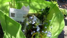 Pflanzen-text1