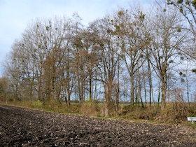 Weitere Baumriesen am Würmkanal mussten fallen